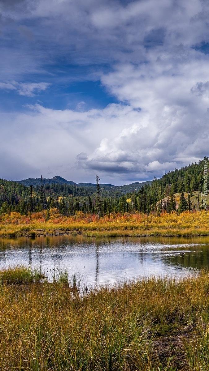Pożółkłe trawy nad jeziorem w Parku Narodowym Jasper