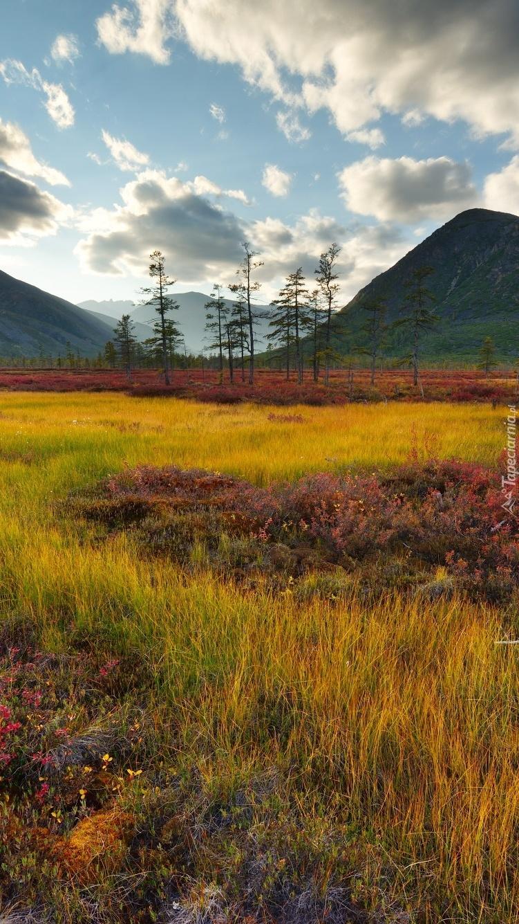 Pożółkłe trawy u podnóża gór Kołymskich
