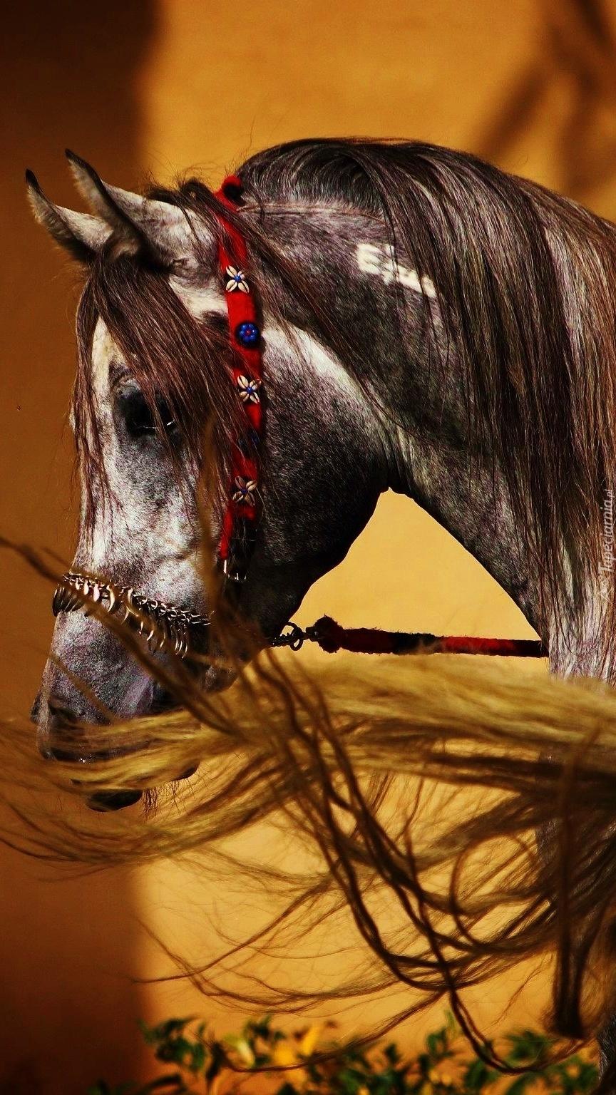 Profil konia