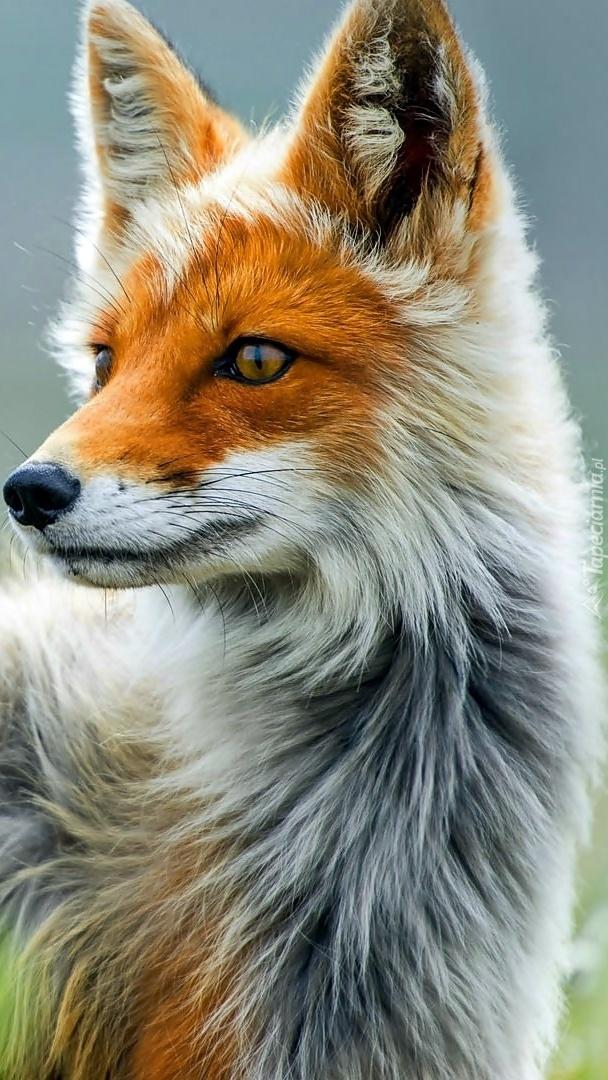 Profil lisa