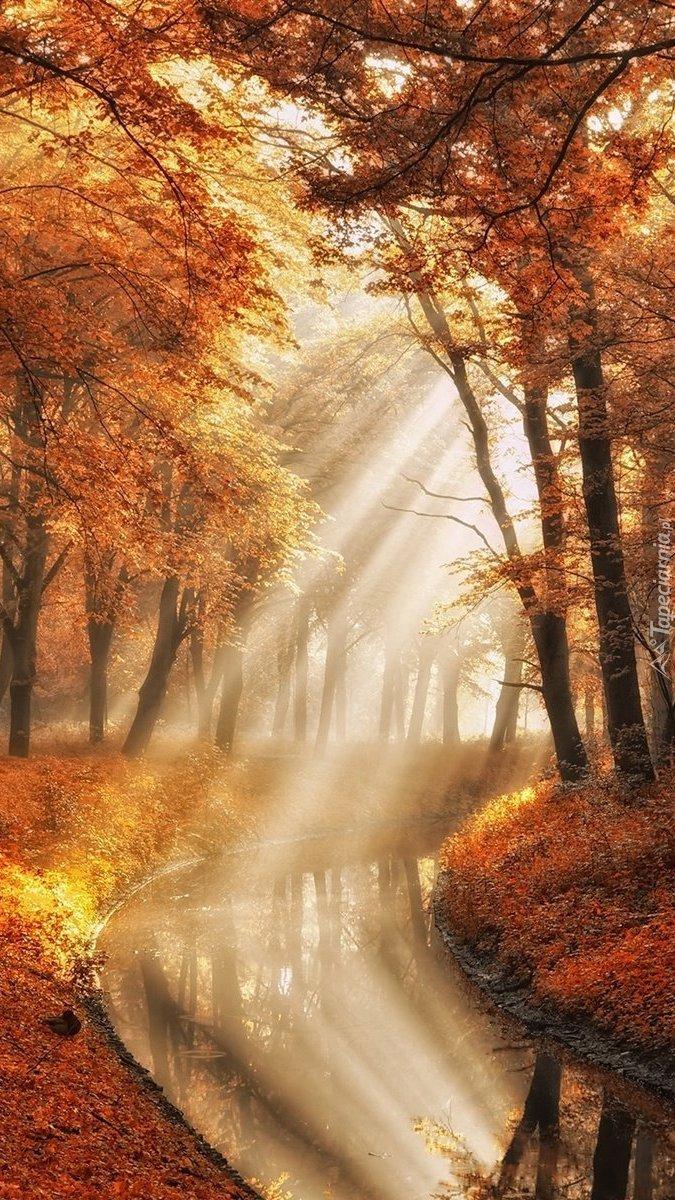 Promienia słoneczne wpadające do rzeczki między drzewami