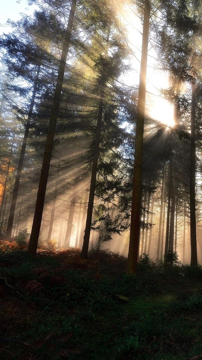 Promienie słońca między drzewami