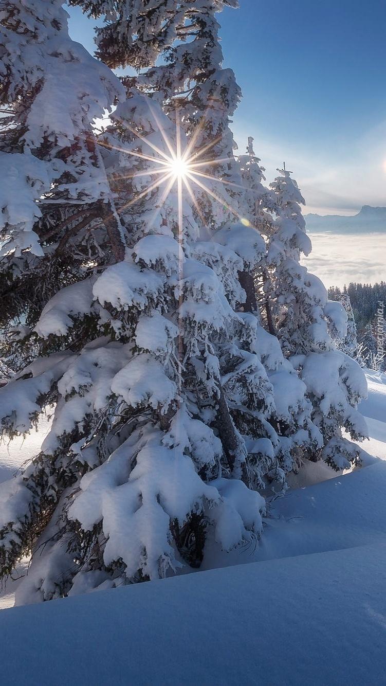 Promienie słońca między gałęziami drzew