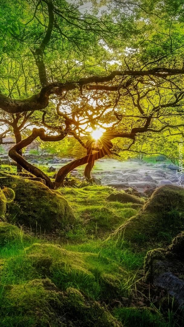 Promienie słońca nad drzewem i omszałymi kamieniami