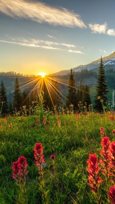 Promienie słońca nad kwiatową łąką