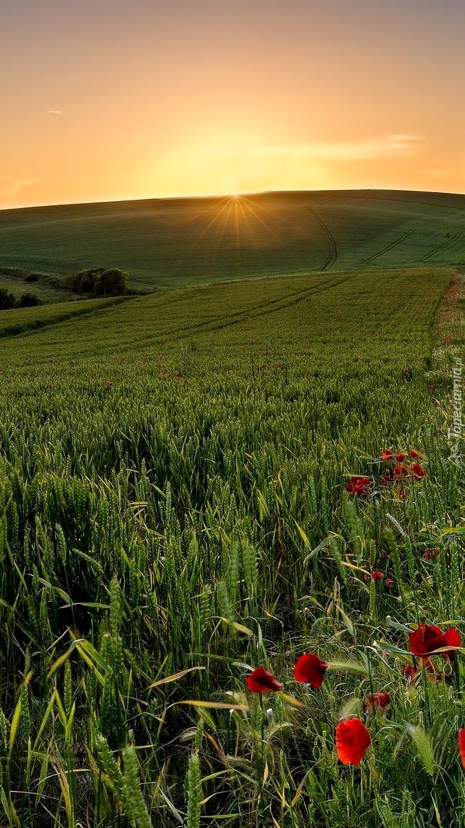 Promienie słońca nad polami