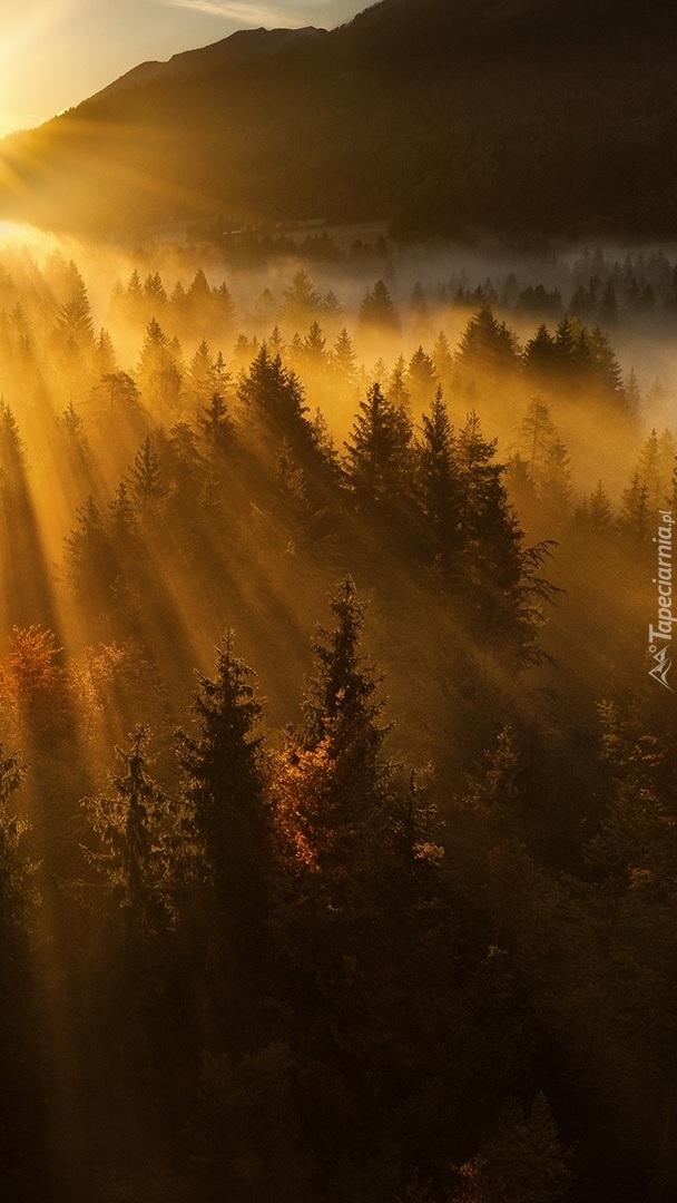 Promienie słońca nad zamglonym lasem
