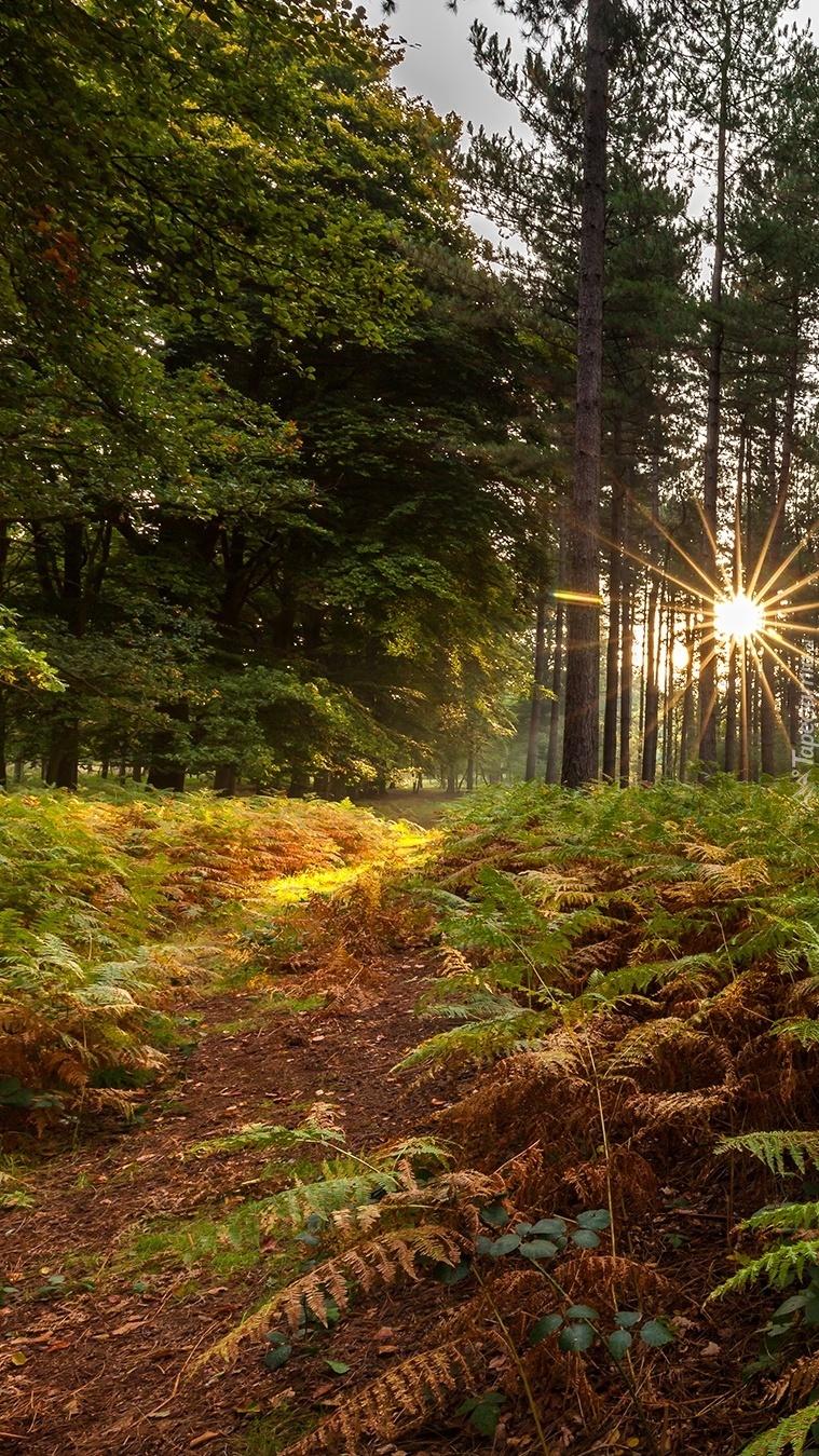 Promienie słońca padające na runo leśne