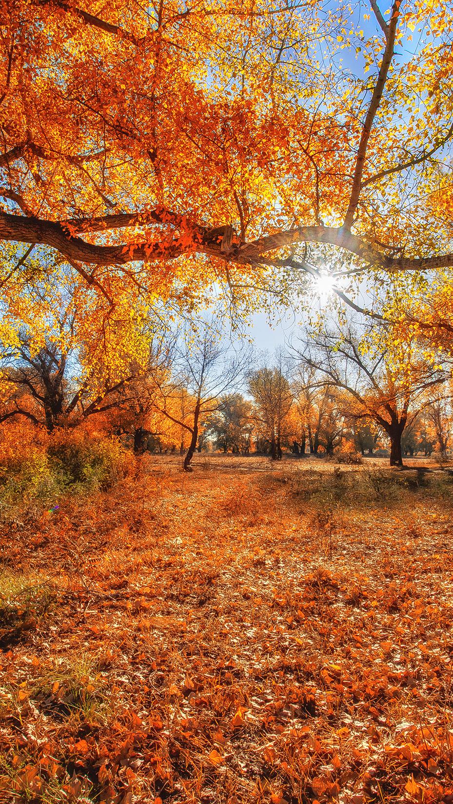 Promienie słońca w jesiennych drzewach