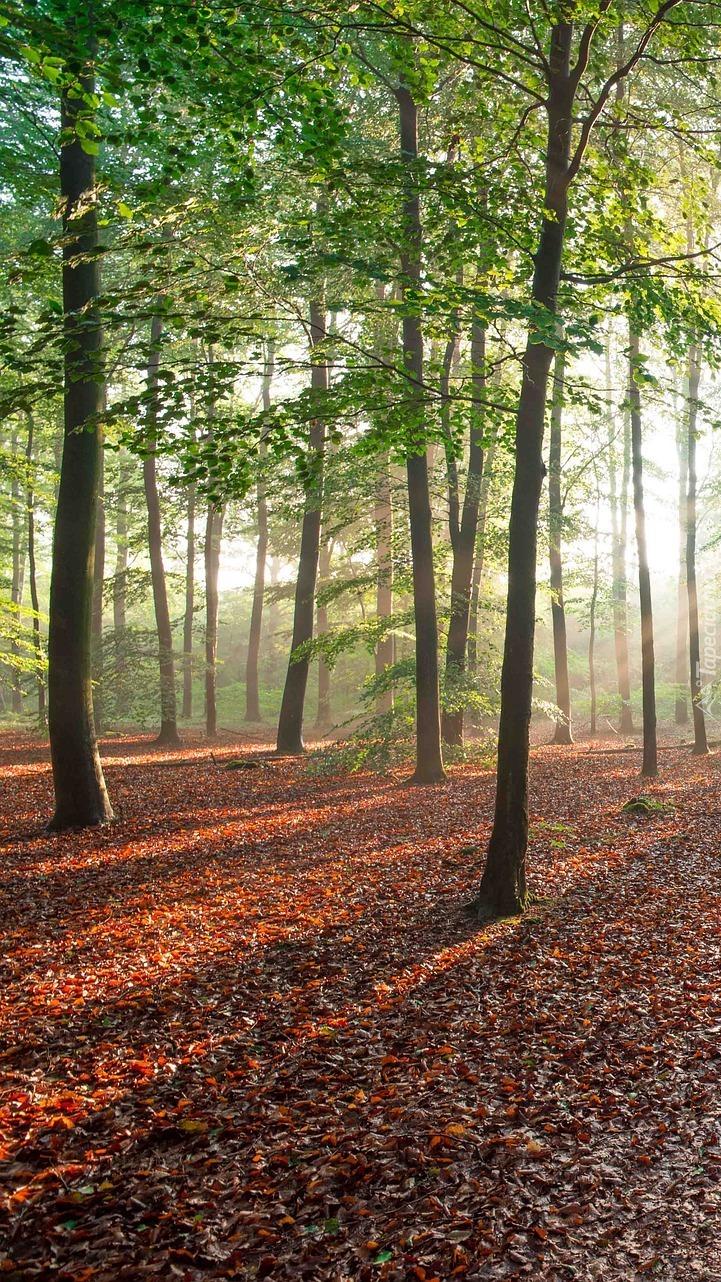 Promienie słońca w lesie