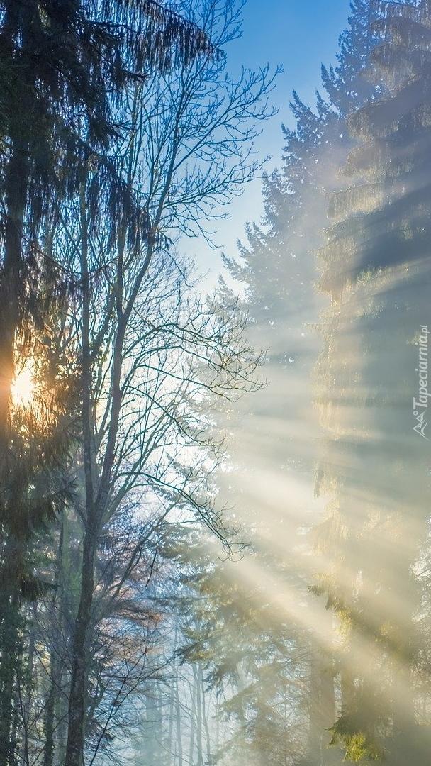 Promienie słońca w zamglonym lesie