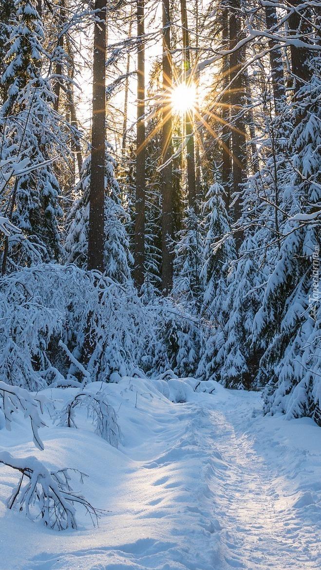 Promienie słońca w zimowym lesie