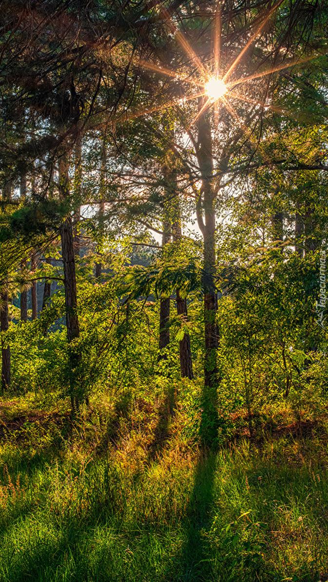 Promienie słońca wśród drzew w lesie