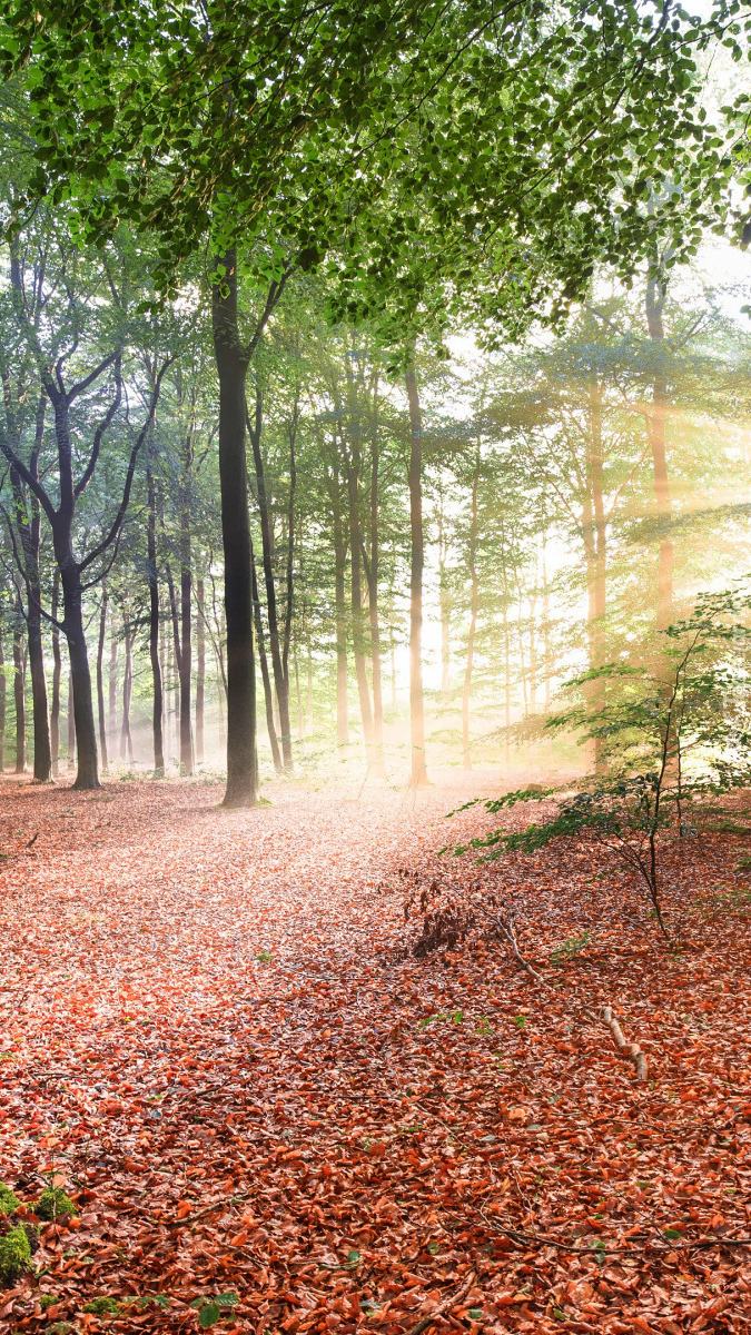 Promienie słońca wśród gałęzi drzew