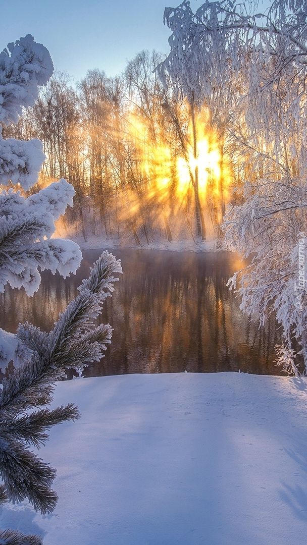 Promienie słońca wśród oszronionych drzew