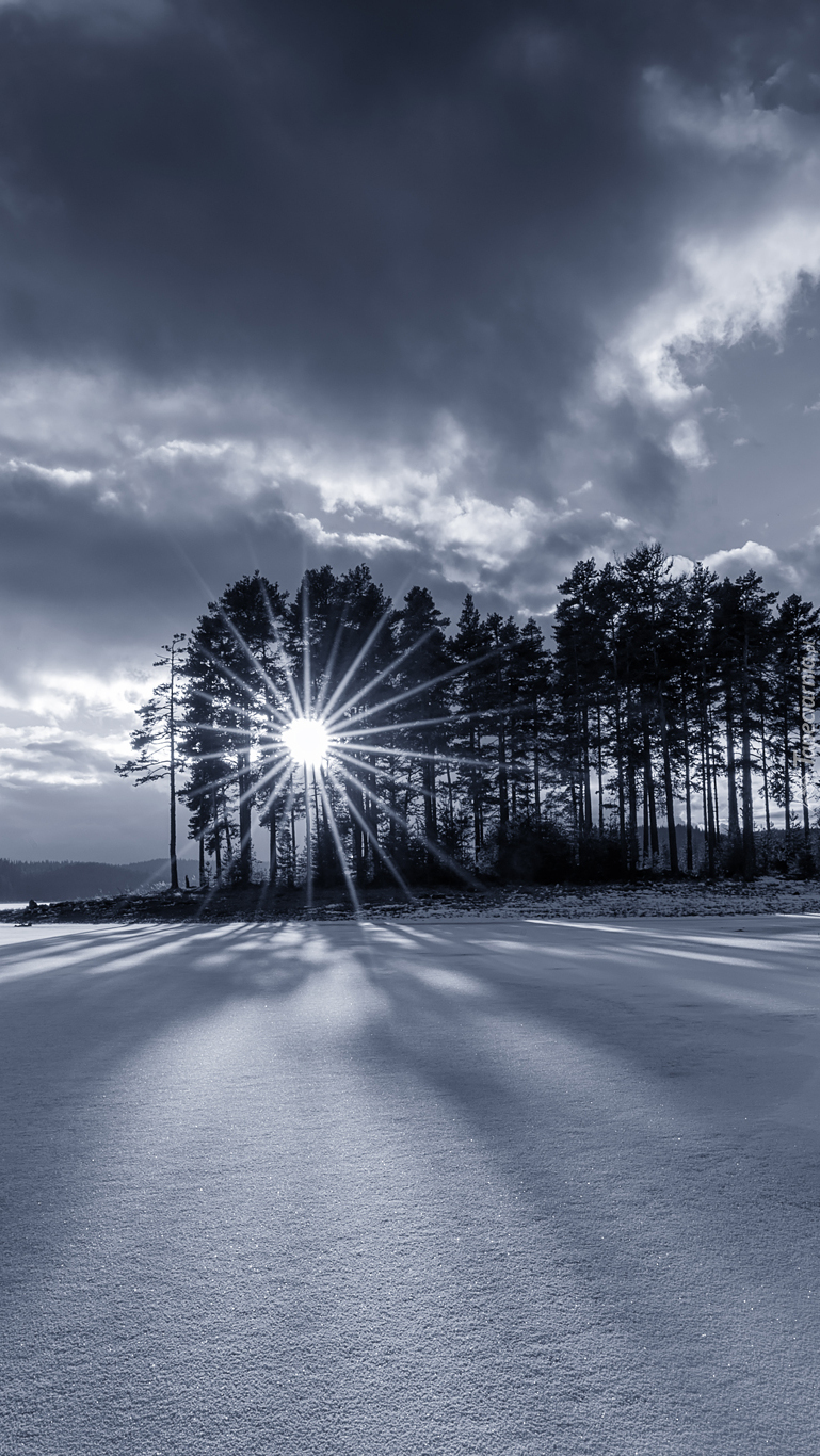 Promienie słońca wśród zimowych drzew