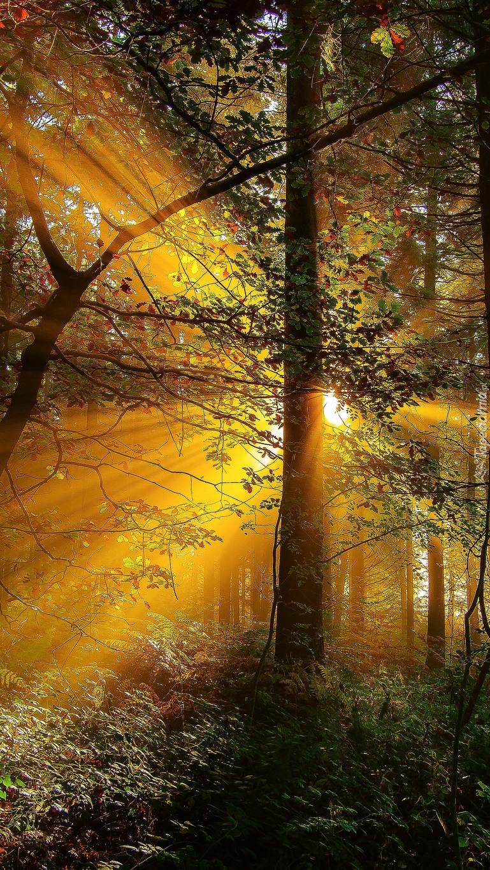 Promienie słoneczne w lesie