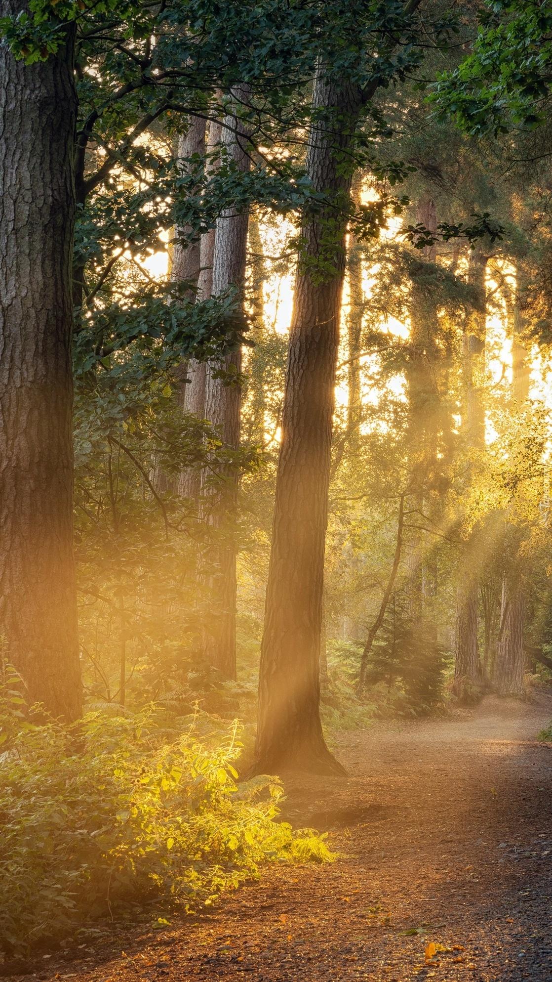Promienie słoneczne w zamglonym lesie