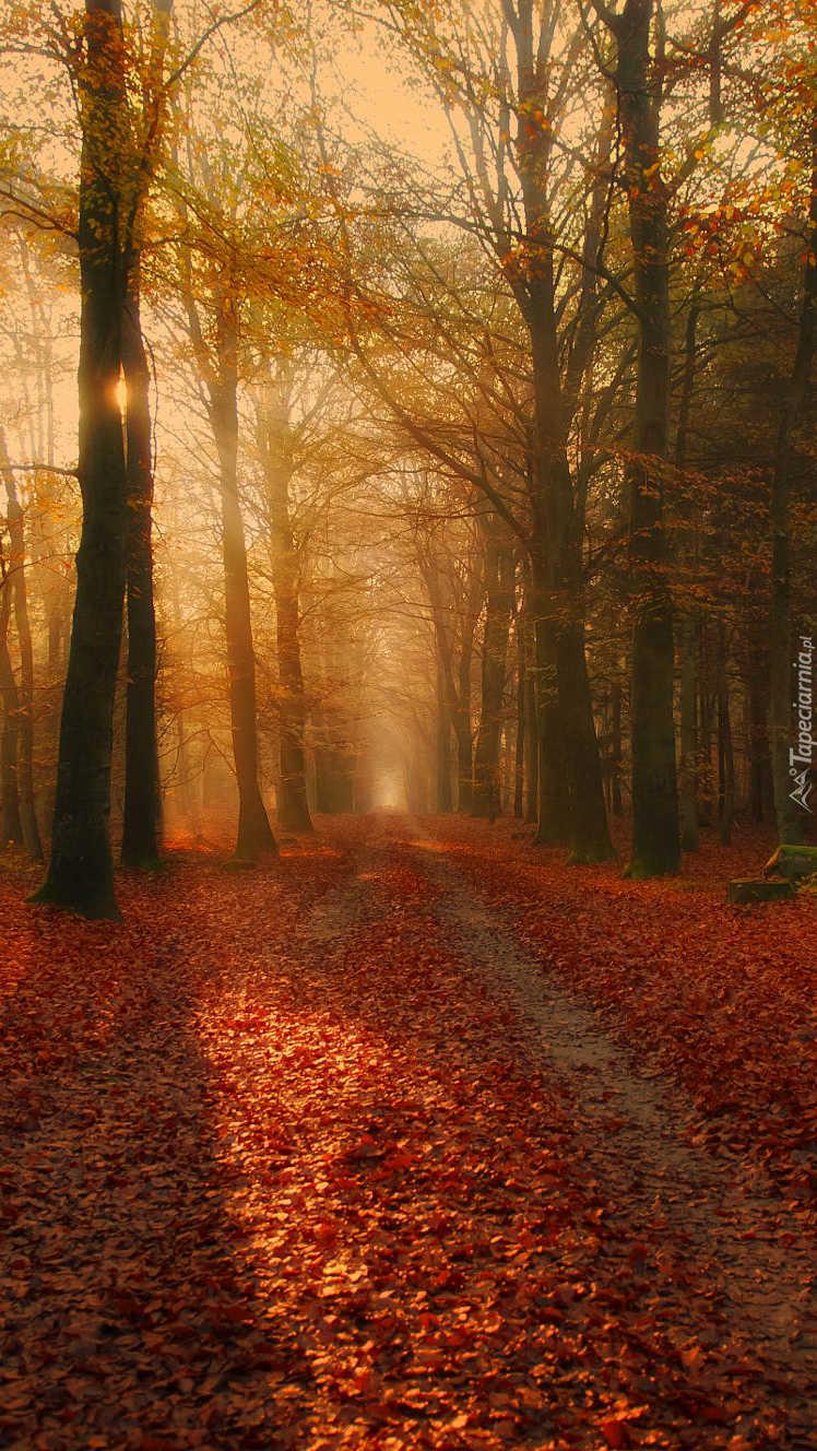 Prosta droga przez jesienny las