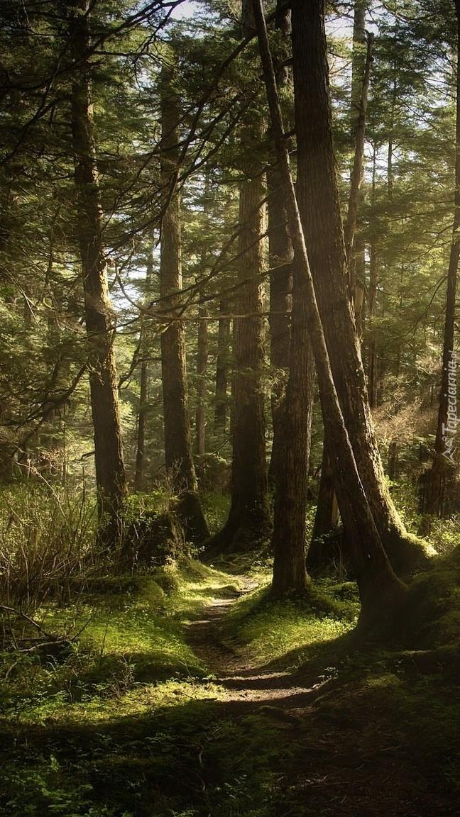 Przebijające światło nad leśną ścieżką
