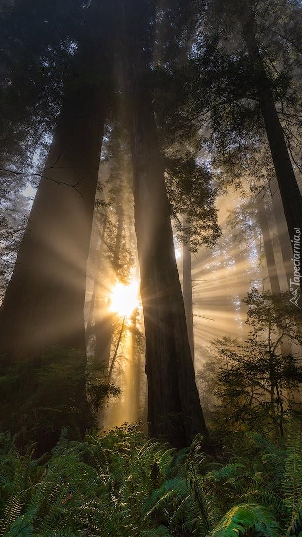 Przebijające światło pomiędzy drzewami