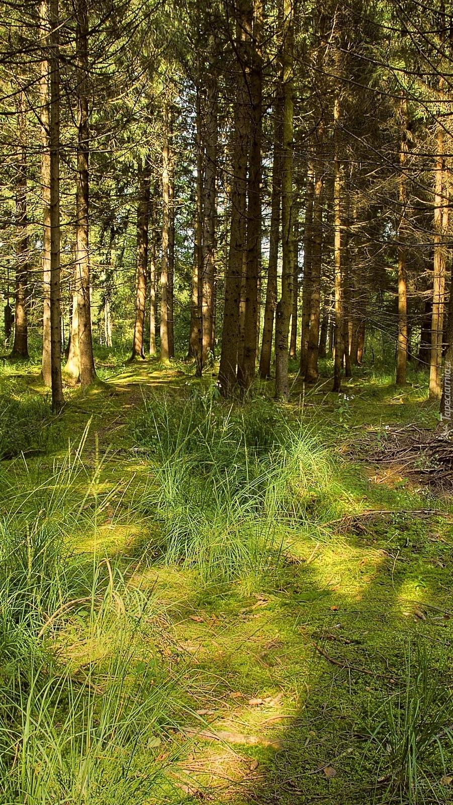 Przebijające światło w lesie