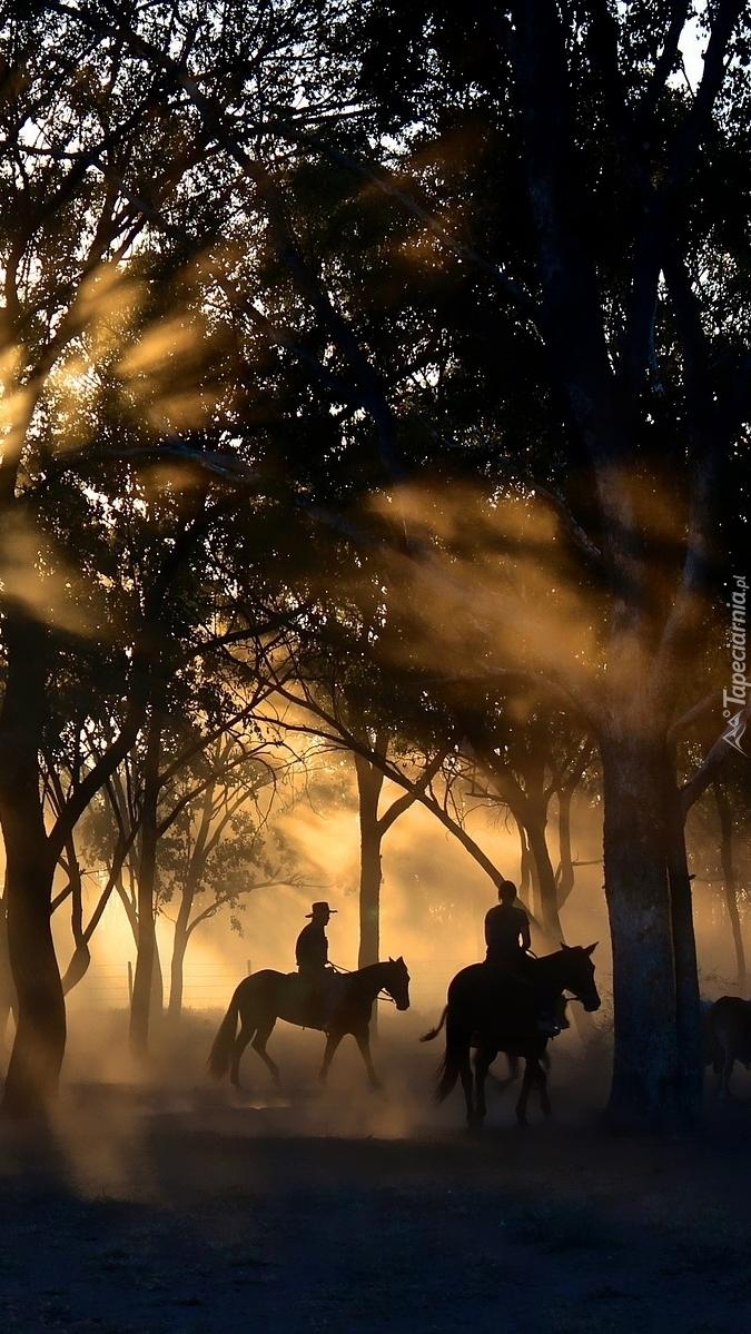Przejażdżka konna w porannej mgle