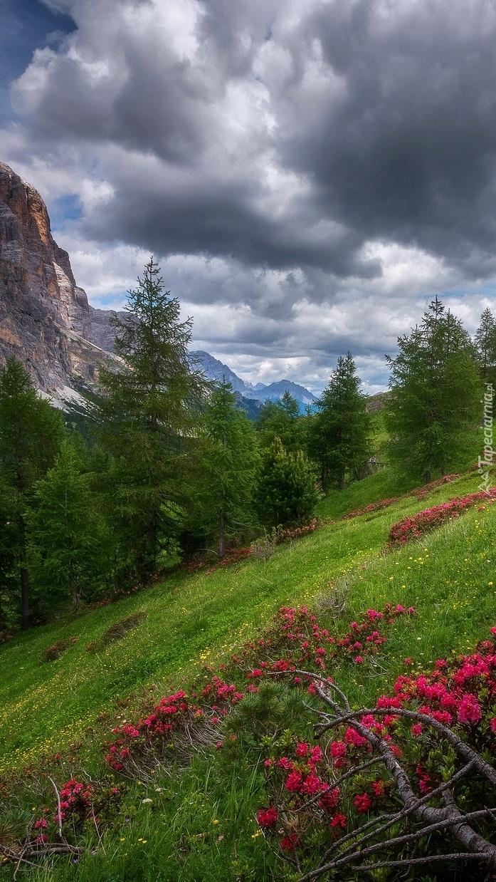 Przełęcz Falzarego Pass w Dolomitach