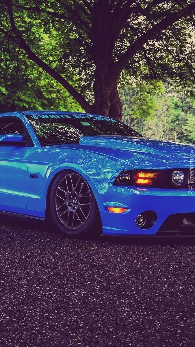 Przód niebieskiego Forda Mustanga Shelby GT700