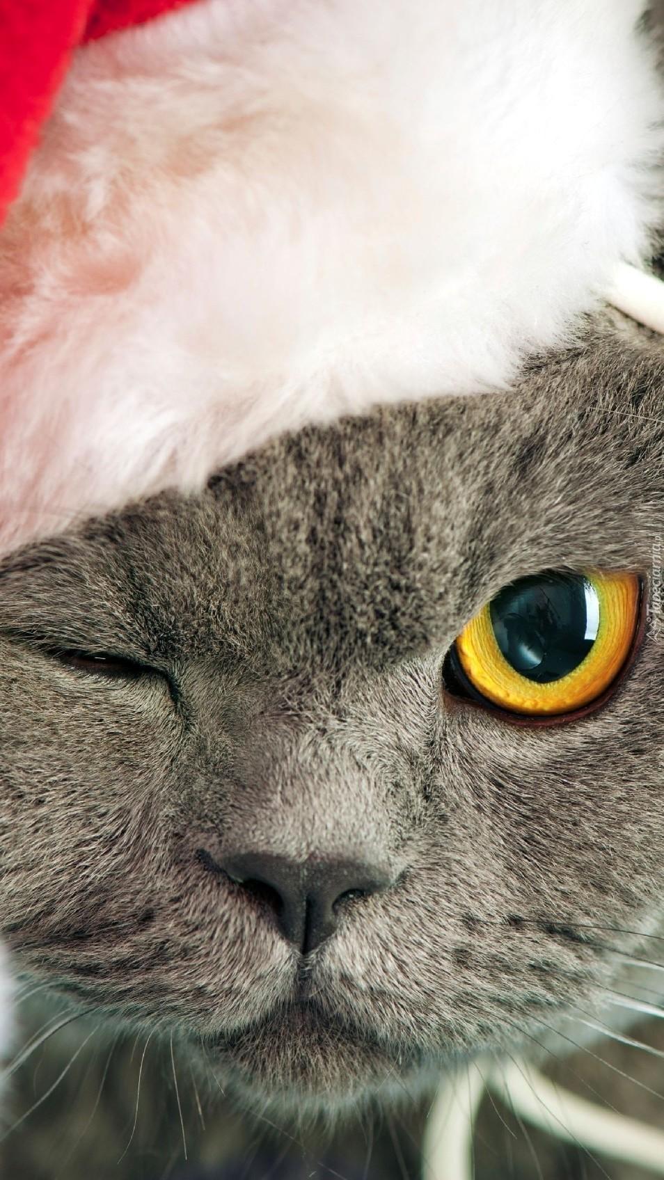 Przymróżone oko kota w czapce Mikołaja
