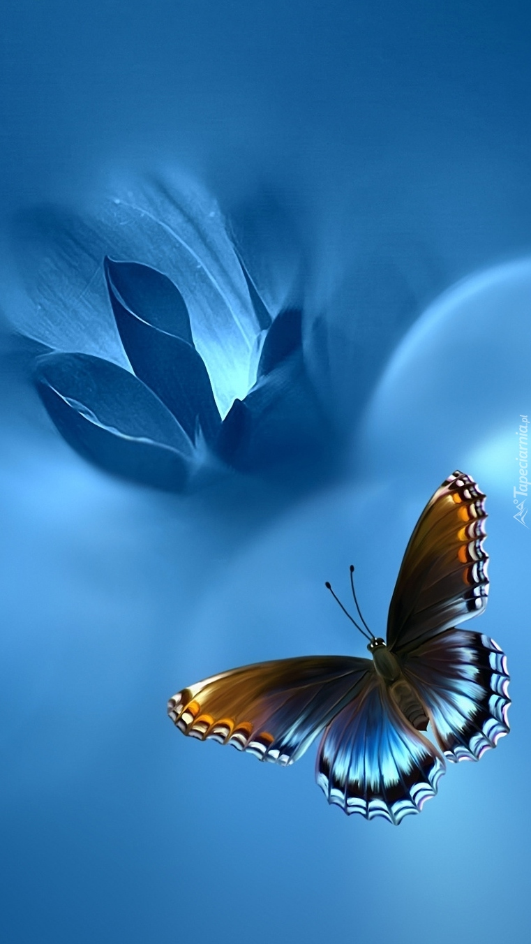 Картинки с бабочками на телефон
