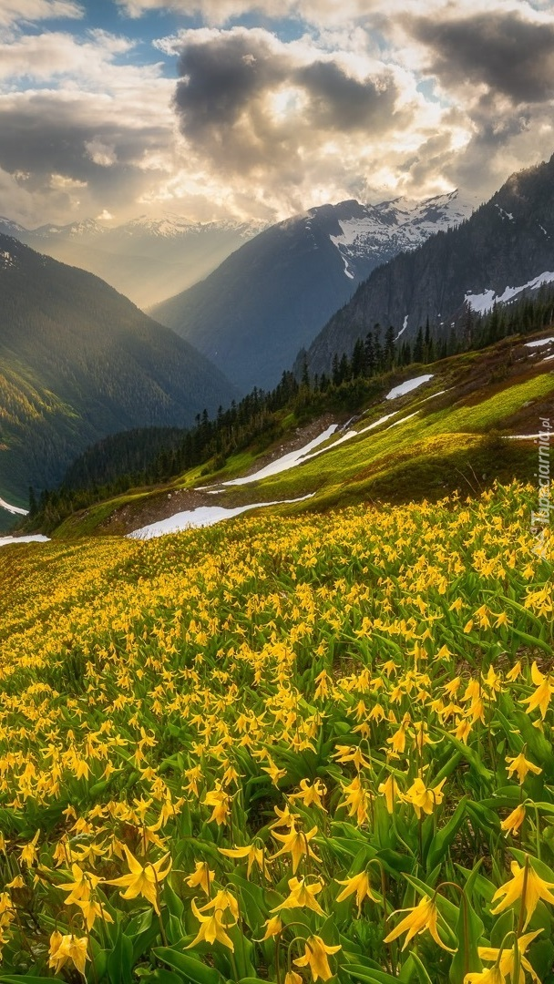 Psizęby na łące w górach