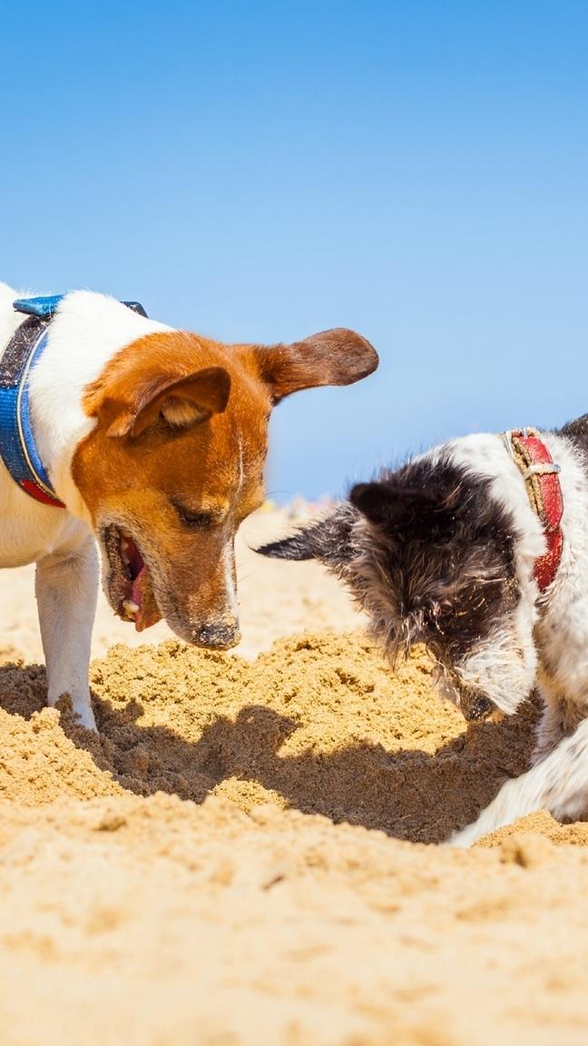Psy podczas zabawy na plaży