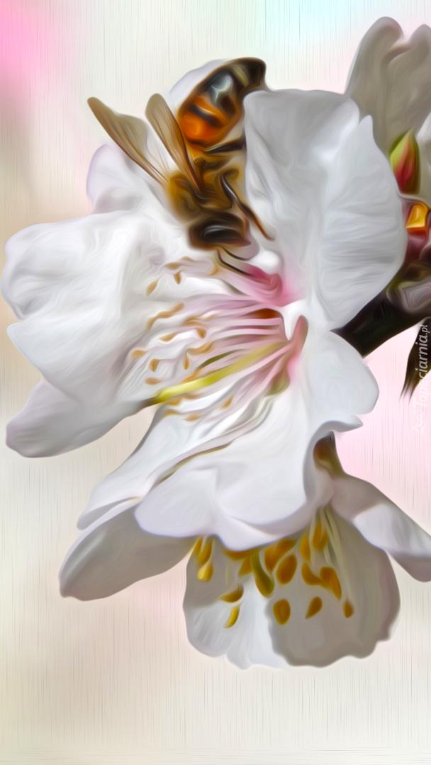 Pszczoła na kwiatkach