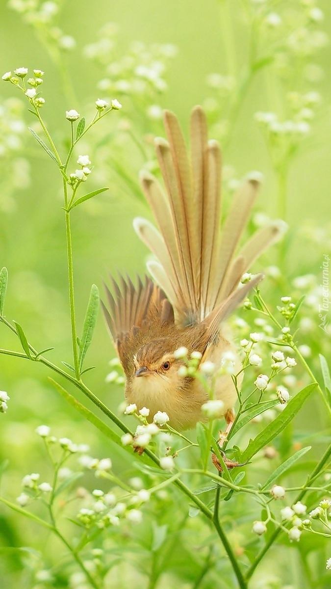 Ptak na białych kwiatach