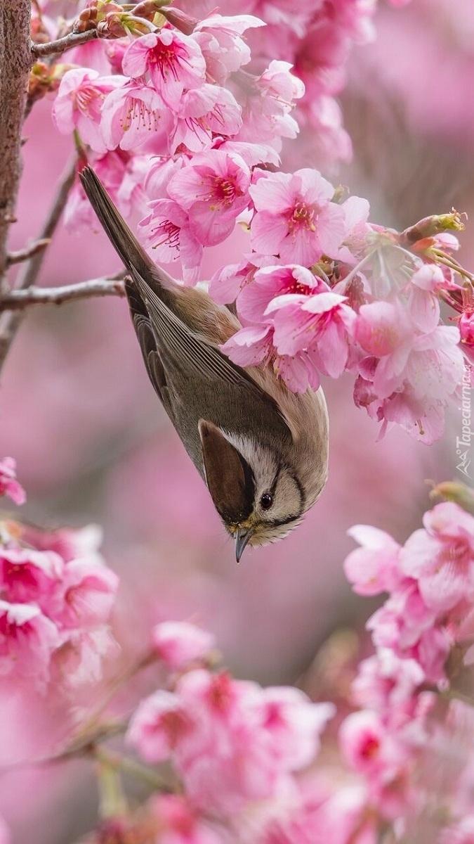 Ptak na gałązce z różowymi kwiatami