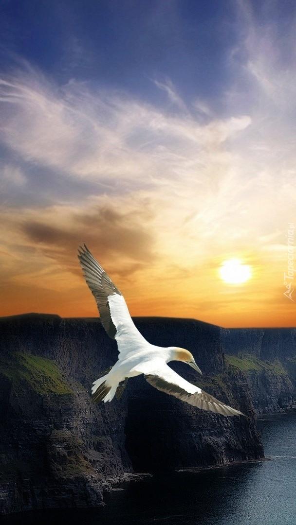 Ptak nad fiordem