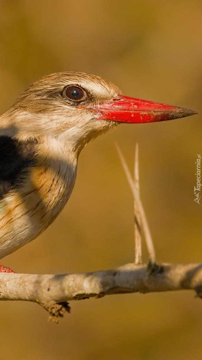 Ptak z czerwonym dziobem na gałązce