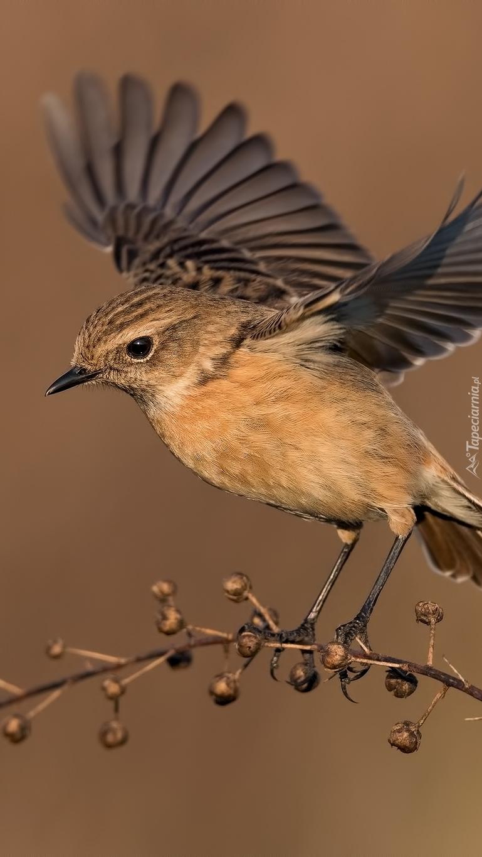 Ptak zrywający się do lotu