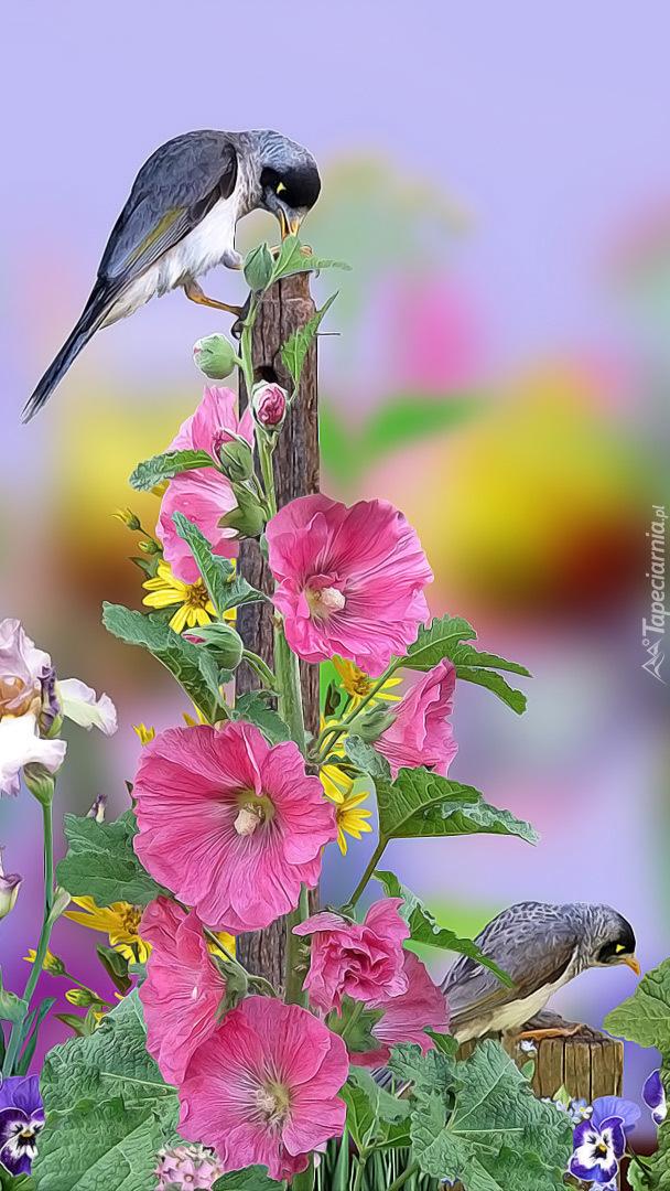 Ptaki na malwie