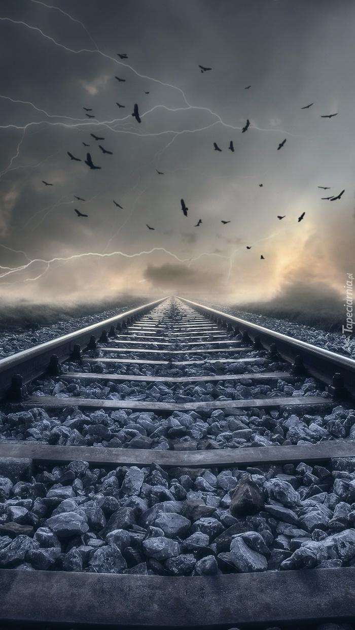 Ptaki nad torami kolejowymi