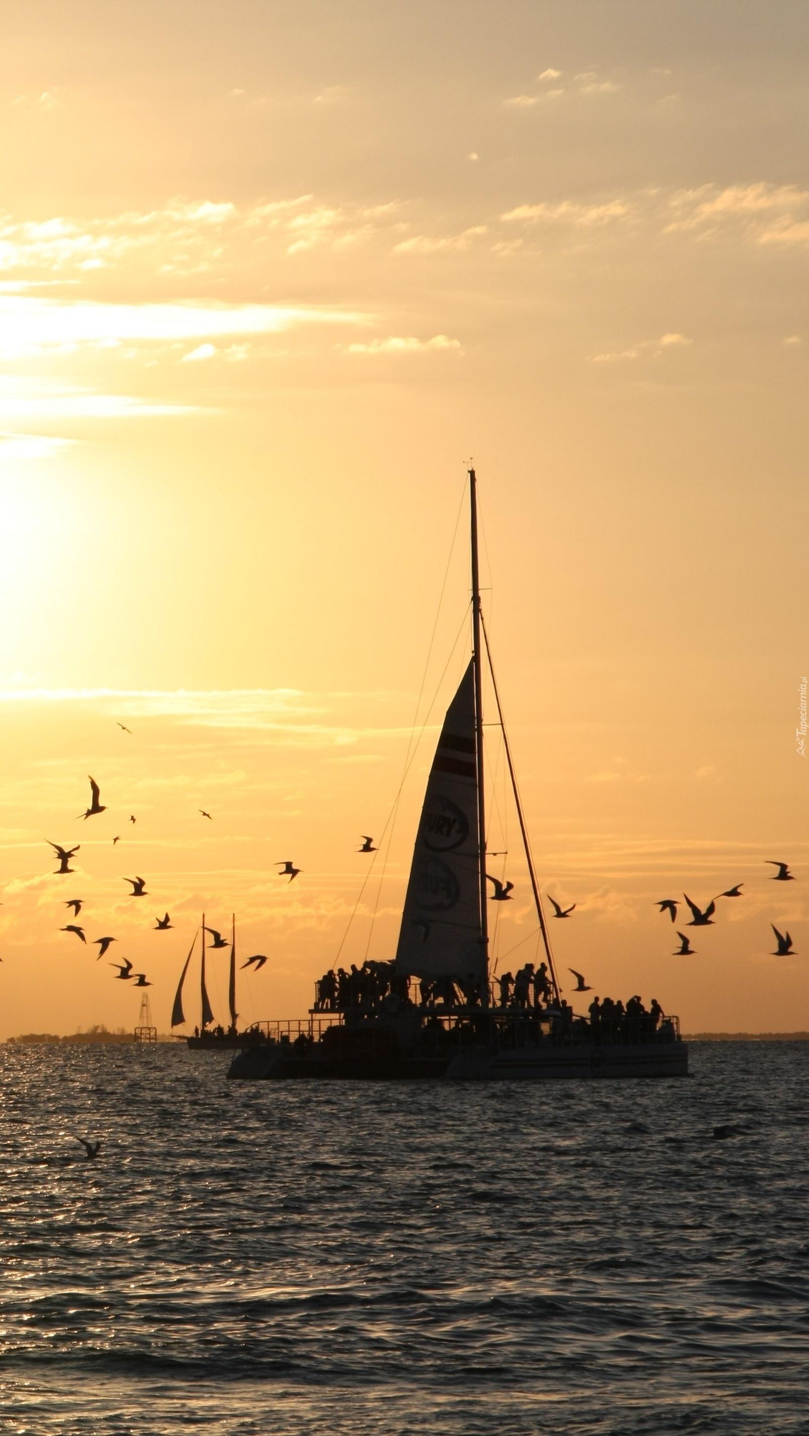 Ptaki wokół łodzi na morzu