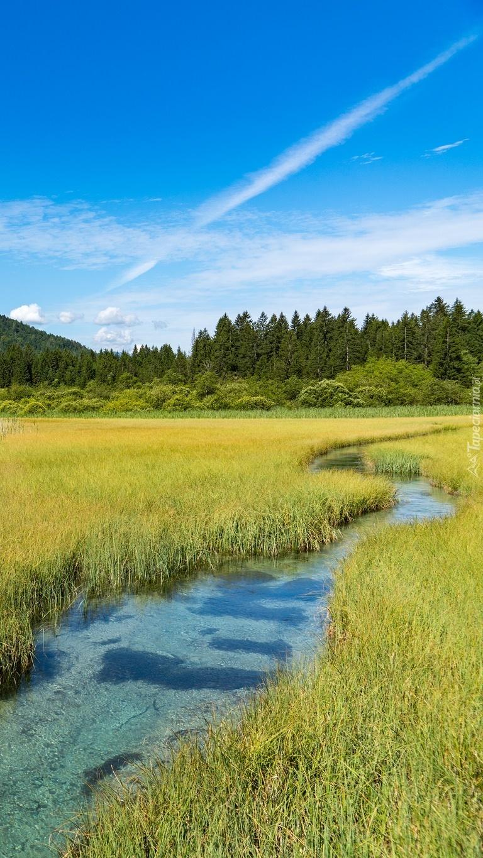 Rezerwat przyrody Zelenci Springs