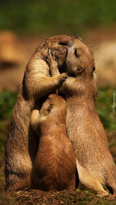 Rodzinka w komplecie