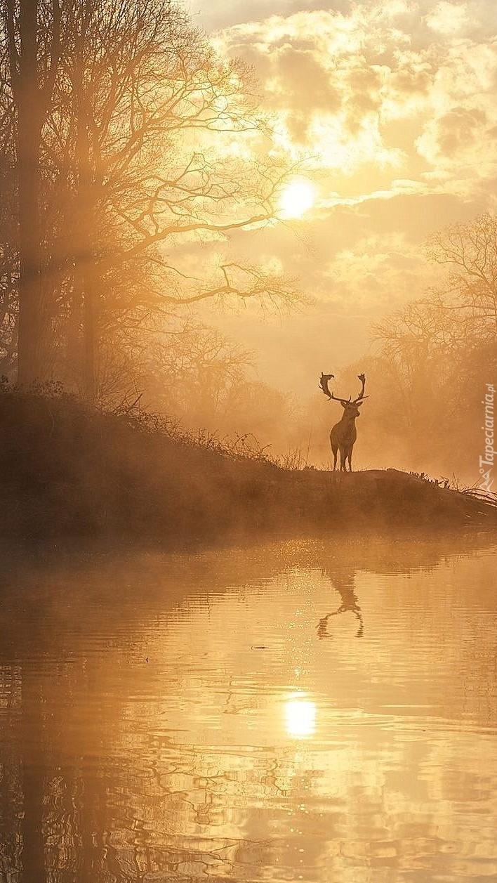 Rogacz we mgle nad rzeką