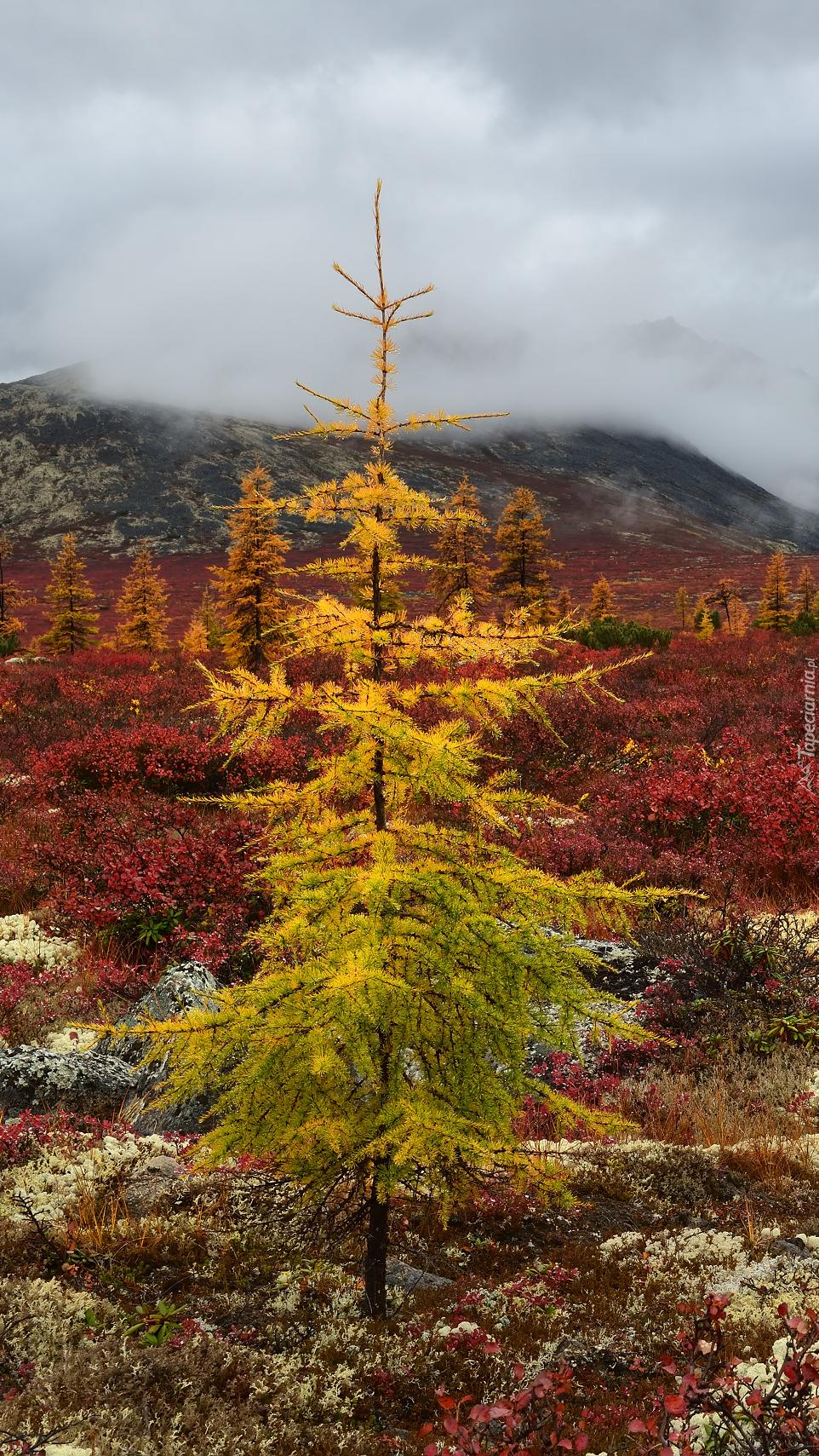 Roślinność w górach Kołymskich