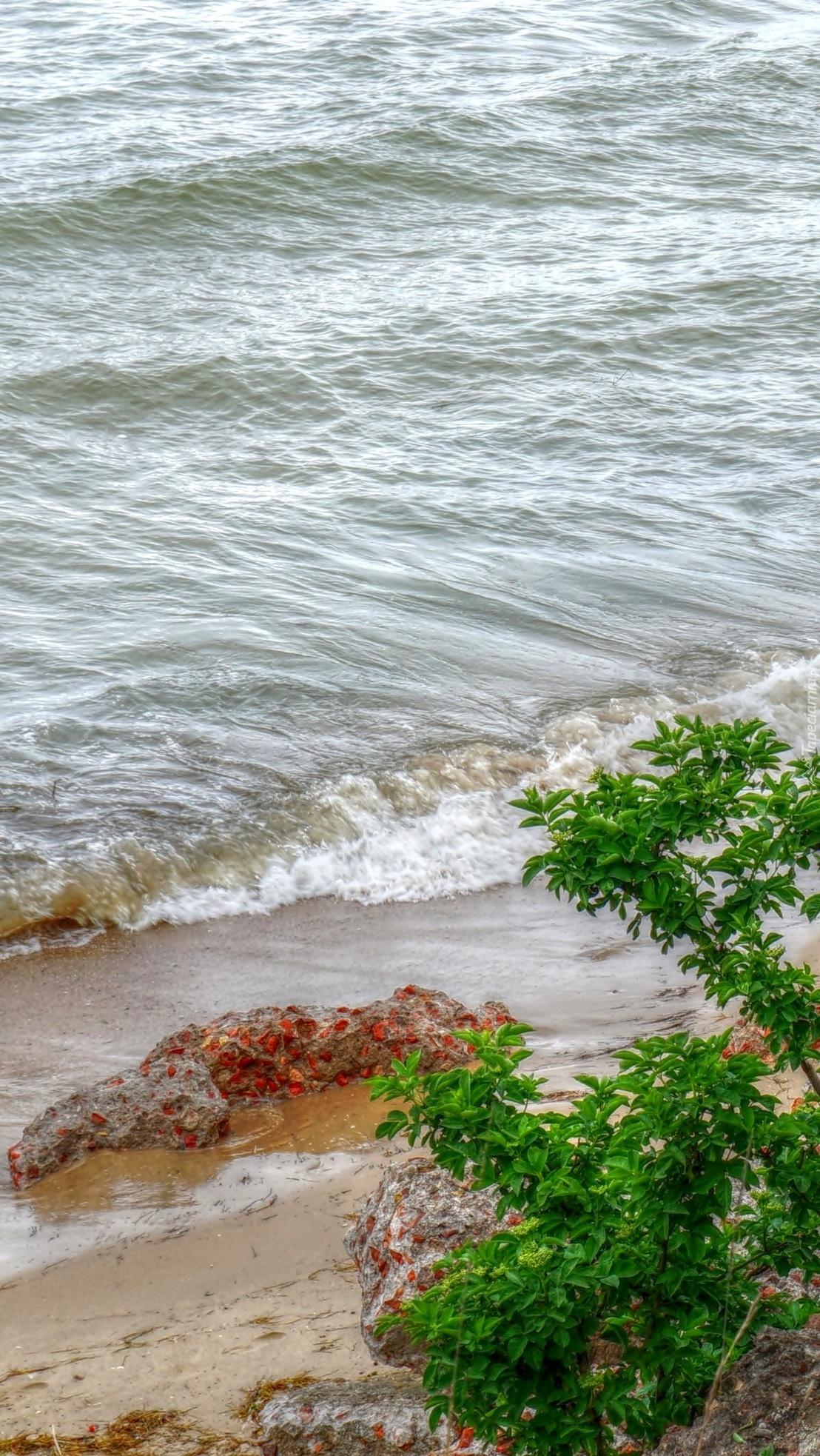 Rośliny nad morzem
