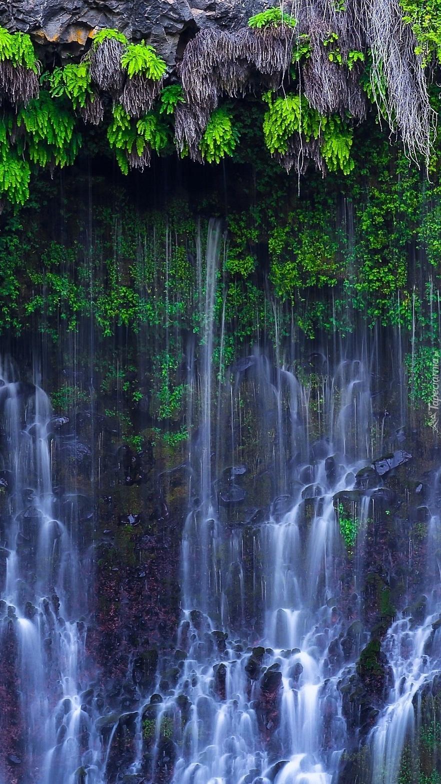 Rośliny nad skalnym wodospadem