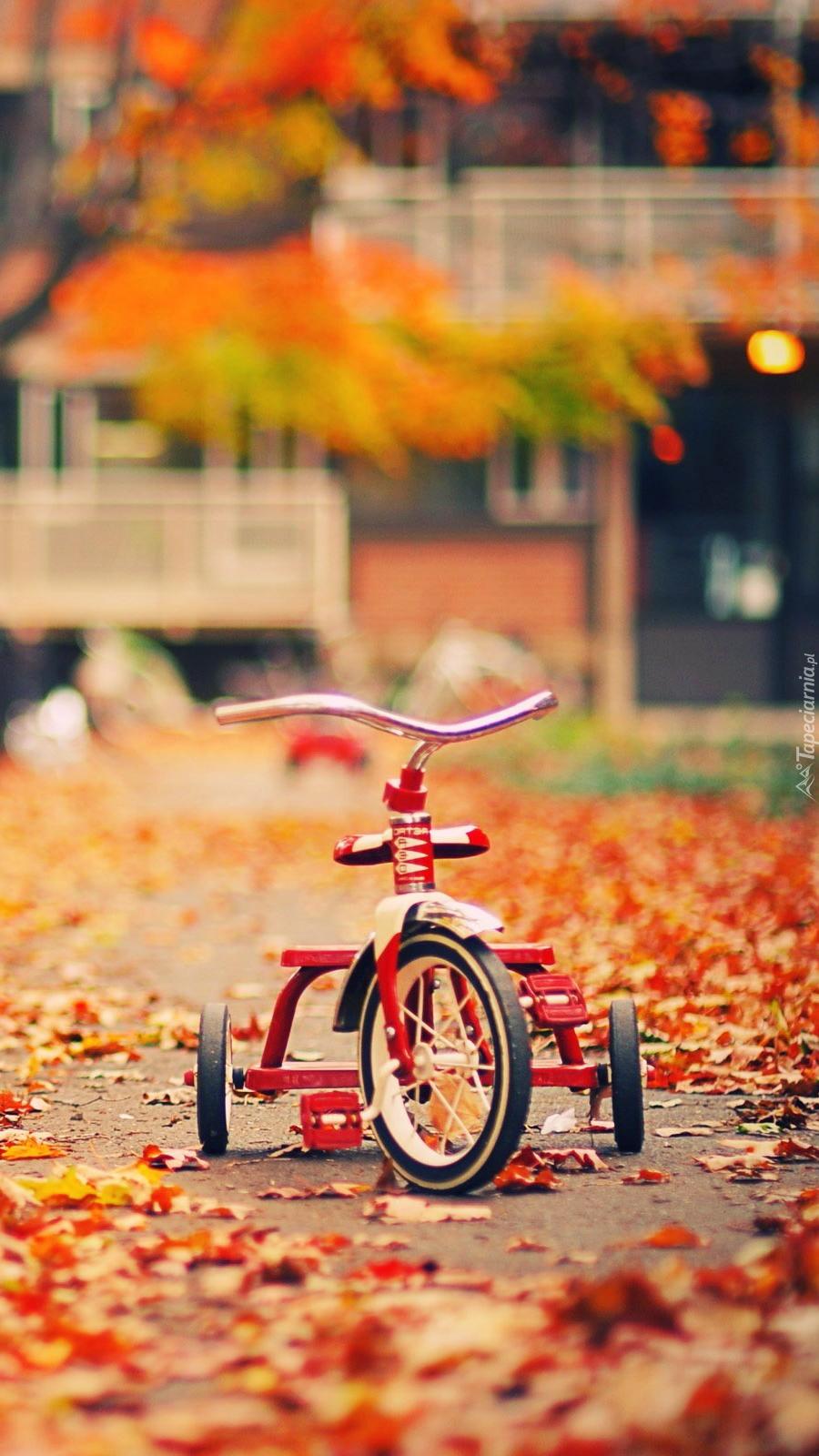 Rowerek w parku jesienną porą
