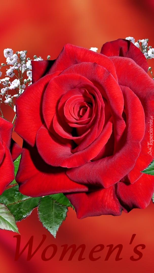 Róża dla kobiety